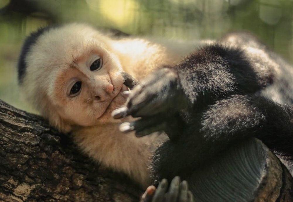 proyecto asis monkey